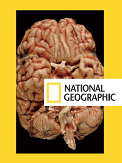 National-Geographic-Brain